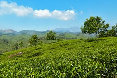 View of tea plantation valley in Munnar Stock Image