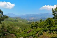 View of tea plantation valley in Munnar Stock Photos