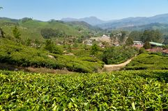 View of tea plantation valley in Munnar Stock Photos