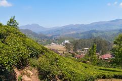 View of tea plantation valley in Munnar Royalty Free Stock Images