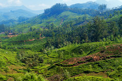 View of tea plantation valley in Munnar Royalty Free Stock Photo