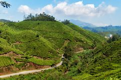 View of tea plantation valley in Munnar Stock Images