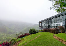 View of tea shop and tea plantations covered with fog Stock Image