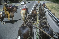 View of team of horses in wagon train. During reenactment near Sacramento, CA Royalty Free Stock Images