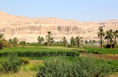 View on the Temple of Hatshepsut. Royalty Free Stock Images