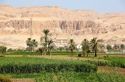 View on the Temple of Hatshepsut. Stock Photos
