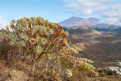 View of Tenerife. Canary Islands Stock Images