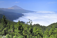 View of Tenerife Island. Clouds and forest  between mountines, Tenerife Island Stock Photo