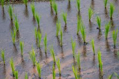 View Terraced Paddy Field in Mae-Jam Village, Chaingmai royalty free stock images