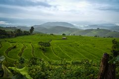 View of terraced rice field in cloudy day at Bong Piang forest in Chiang Mai, Thailand. Beautiful view of rice terraces at Bong Piang forest in Chiang Mai stock photography