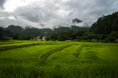 View of terraced rice field in cloudy day at Mae Klang Luang in Chiang Mai, Thailand. Beautiful view of terraced rice field in cloudy day at Mae Klang Luang in stock photography