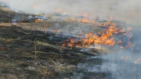 View of terribly burnt field after a dangerous wild fire in the daytime. Burning dry grass. A large area of nature is in