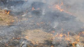View of terrible dangerous wild fire in the daytime in the field. Burning dry straw grass. A large area of nature is in