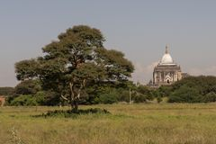 View of Thatbyinnyu Temple, Bagan. Panoramic View of the archaeological park of the ancient temples and pagodas of Bagan. Myanmar royalty free stock image
