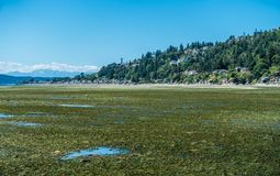 Three Tree Point At Low Tide stock photography