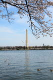 DC cherry blossom 4. The view from tidal basin walk way. In the center is Washington monument. Catching DC cherry blossom landscape Royalty Free Stock Photography