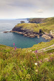View from Tintagel. Portrait view looking east from Tintagel over Cornish coastline, showing wild flowers in foreground Stock Image