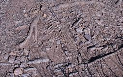 TIPS OF ROCKS AND TREE ROOTS PROTRUDING THROUGH THE GROUND. View of tips of rocks and tree roots embedded in the earth protruding through the surface royalty free stock images