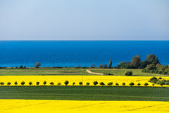 View to the Baltic Sea with canola field Stock Image
