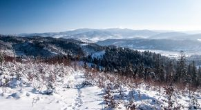 View to Beskid Zywiecki mountain range from Ganczorka hill in Beskid Slaski mountains in Poland during winter day with clear sky. View to Beskid Zywiecki Royalty Free Stock Photos
