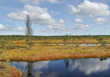 View to the bog. Stock Photography