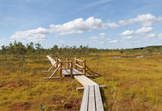 View to the bog. Royalty Free Stock Photos