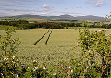 View to the Cheviots. Cheviot View stock images