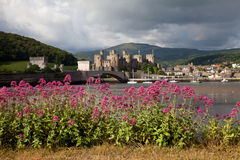 View to Conwy with flowers Royalty Free Stock Photo