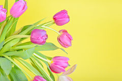 View to the easter pink tulips Stock Image
