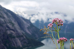 View to Eidfjord from Kjeansen farm, Norway Stock Images