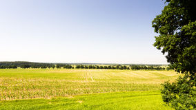 View to the fields. View from viewpoint in forest Stock Photography
