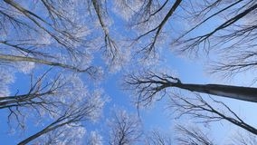 View to frozen top trees on blue sky background.  stock footage