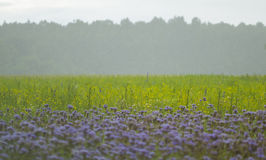 View to a grass field and flowers Facelay near the forest  at th Stock Images