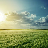 View to green field with harvest under sunset Royalty Free Stock Photo