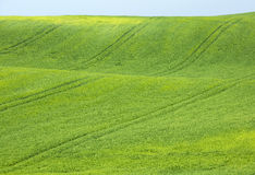 View to green wheat field Royalty Free Stock Images