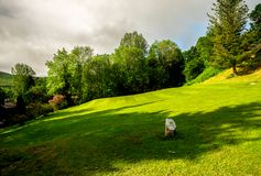A view to hole sixteen tee off and fairway at Loch Tay disc golf course Stock Images