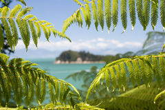 View to an island from forest of fern. View to an island through window of ferns at Abel Tasman National Park, New Zealand royalty free stock photography
