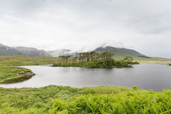 View to island in lake or river at ireland Stock Images