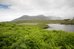 View to island in lake or river at ireland Stock Image