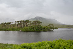 View to island in lake or river at ireland Royalty Free Stock Photos