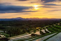View to the Jatiluwih rice terraces at sunrise on Bali island, I Royalty Free Stock Image