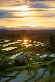 View to the Jatiluwih rice terraces at sunrise on Bali island, I Stock Photos