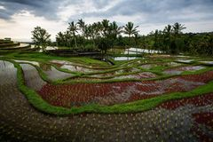 View to the Jatiluwih rice terraces at sunrise on Bali island, I Stock Photography
