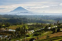 View to the Jatiluwih rice terraces at sunrise on Bali island, I Royalty Free Stock Images