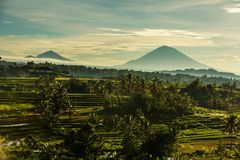View to the Jatiluwih rice terraces at sunrise on Bali island, I Stock Image