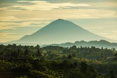 View to the Jatiluwih rice terraces at sunrise on Bali island, I Royalty Free Stock Photo