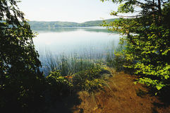 View to Laacher See lake with its trees. Still active volcan of eifel region (Germany royalty free stock images