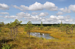 View to the lake in the bog. Royalty Free Stock Photography