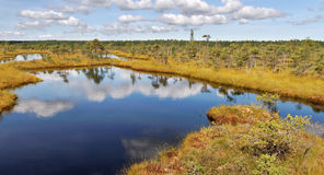 View to the lake in the bog. Stock Photo
