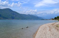 View to lake Como and ducks swimming. Royalty Free Stock Photo